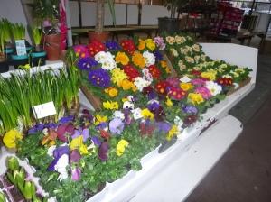 Fleuriste du marché Colonie